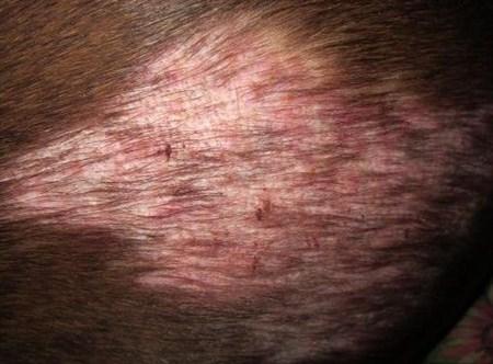 кожные заболевания у собак фото демодекоз