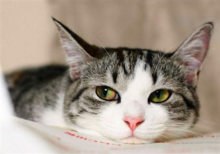 Шерсть у кота взъерошенная