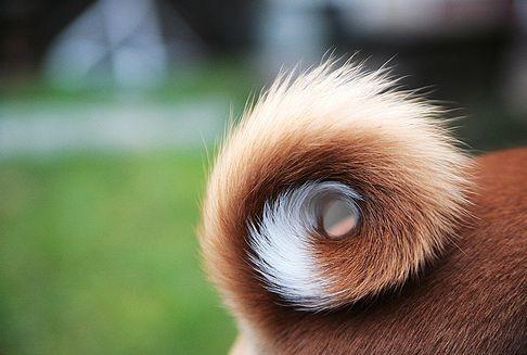 Как купировать хвост у собаки – методы и рекомендации